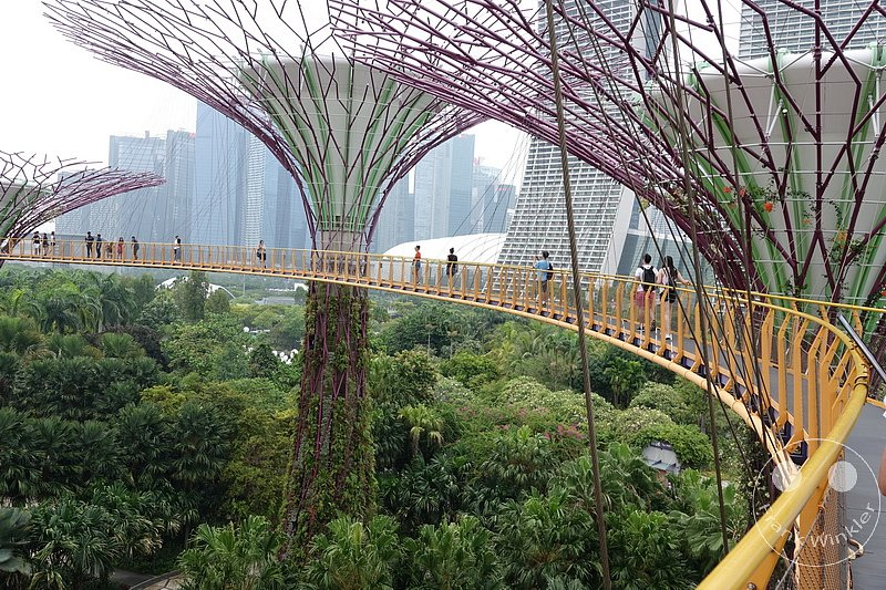 Singapur - Supertree Grove - Gardens by the Bay