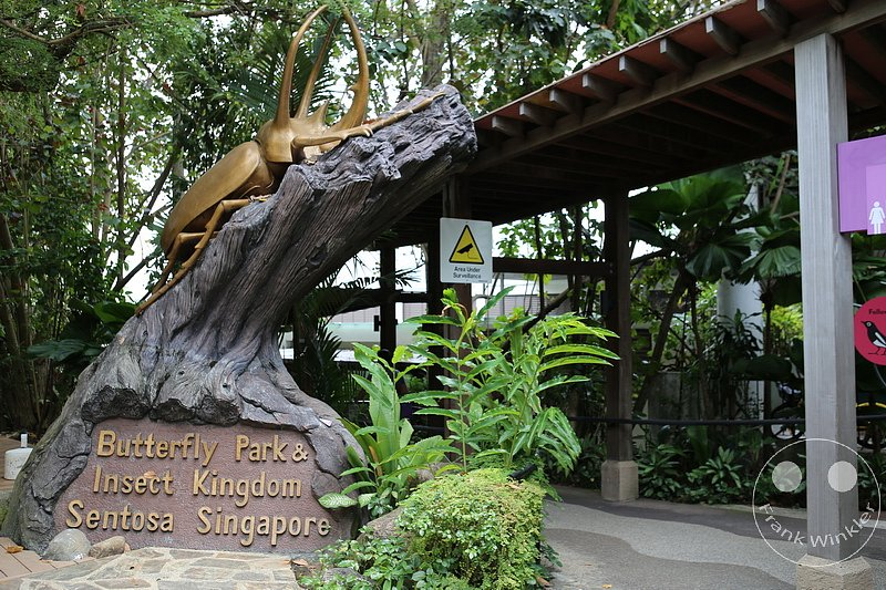 Singapur - Sentosa - Butterfly Park & Insect Kingdom